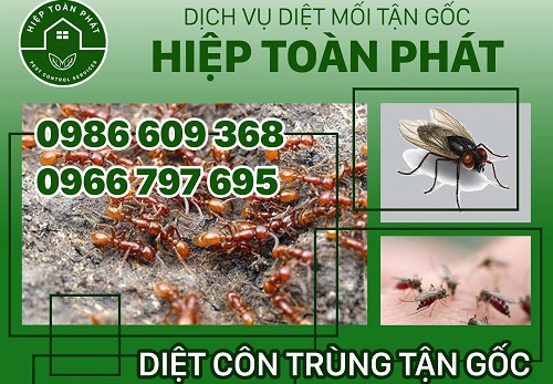 top-8-cong-ty-diet-moi-uy-tin-nhat-tai-tp-hcm-1