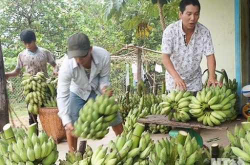 top-8-cong-ty-xuat-khau-trai-cay-lon-nhat-viet-nam-5
