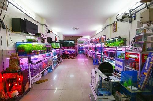 Top 10 địa chỉ bán bể cá cảnh đẹp giá rẻ tại TP.HCM