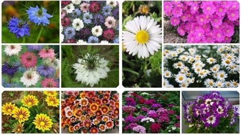 Top 10 địa chỉ bán hạt giống hoa giá rẻ uy tín nhất ở TP.HCM
