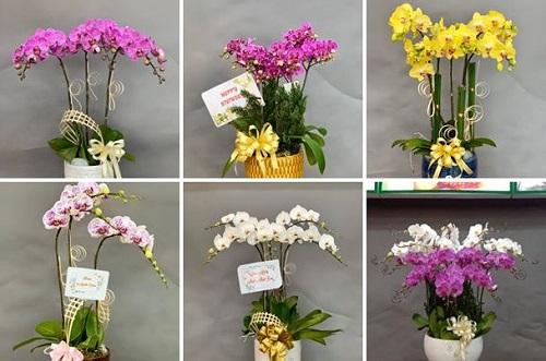 Top 5 Shop hoa tươi đẹp giá rẻ nhất tại Thủ Đức