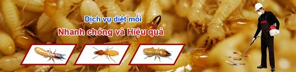 top-5-dich-vu-diet-moi-tan-goc-tot-uy-tin-nhat-o-quan-tan-phu-2