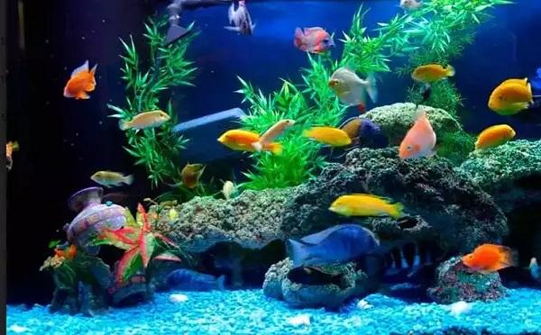 Top 5 tiệm bán cá cảnh đẹp, giá rẻ tại quận Gò Vấp