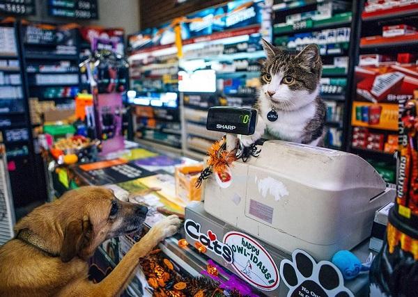 Top 10 địa chỉ bán thú cưng uy tín nhất ở TP.HCM