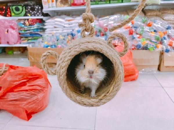 Top 10 cửa hàng bán chuột Hamster đẹp, giá rẻ tại TP.HCM