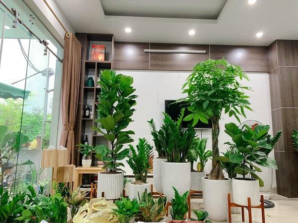 Top 10 địa chỉ bán cây cảnh giá rẻ uy tín nhất tại Hà Nội
