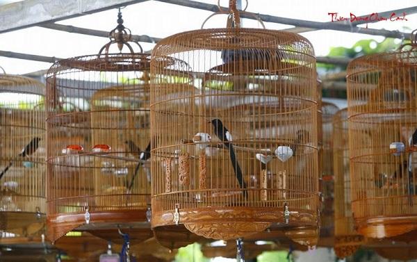 Top 5 cửa hàng bán chim cảnh đẹp, nổi tiếng TP.HCM
